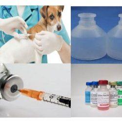 Veterinary Vaccines